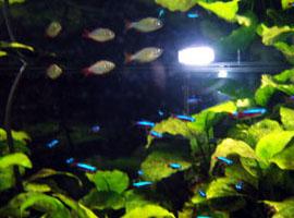 かわいい熱帯魚たち。